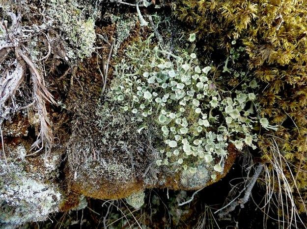 funguslarge